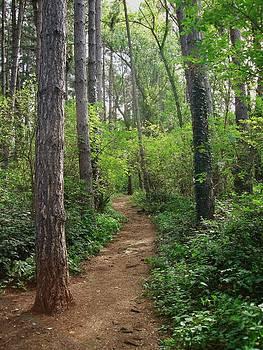 Woodland Walk by Philip Francis