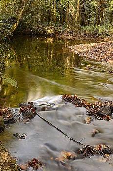 Martina Fagan - Woodland Water
