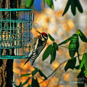 Woodpecker Delight by Jinx Farmer