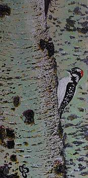 Woodpecker by Joyce Sherwin
