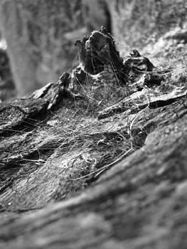 Sandy Tolman - Woods - 5824 BW - Webs