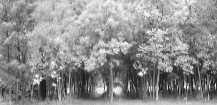 Minartesia - Woods BW