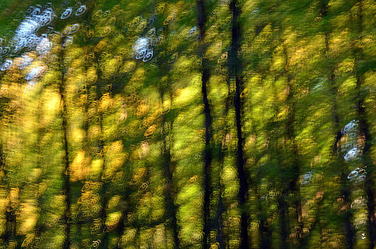 Minartesia - Woods Impressions-1