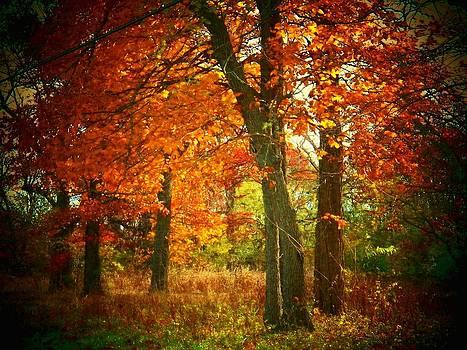 Woods in Autumn by Joyce Kimble Smith