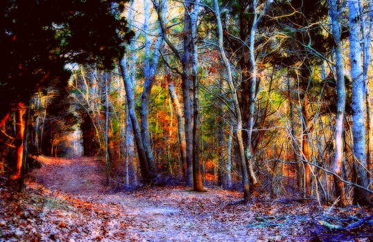 Marysue Ryan - woods