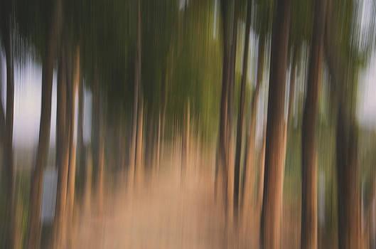 Woods by Preet Chakraborty