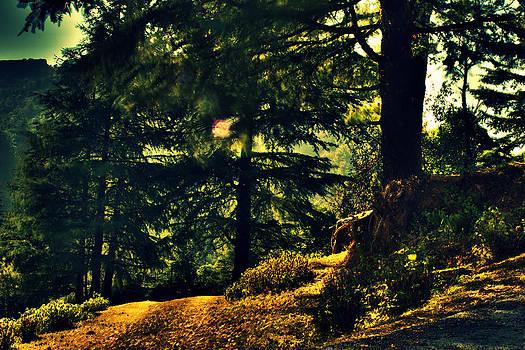 Woods by Salman Ravish