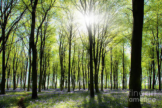 Simon Bratt Photography LRPS - Woods with bluebells and morning light