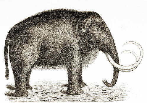 British Library - Woolly Mammoth