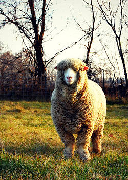 Wooly by Amy Schauland