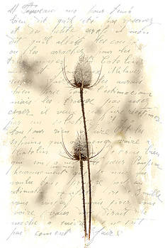 Mother Nature - Words and Weeds - Teasels and Snow