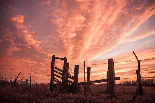 Working Cattle/ End of Day by Shirley Heier