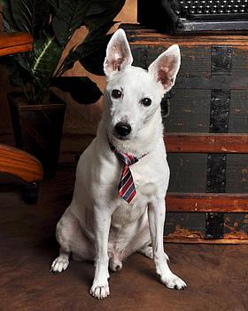 Rebecca Brittain - Working Class Dog in Tie