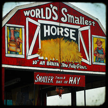 World's Smallest Horse by Sharon Coty