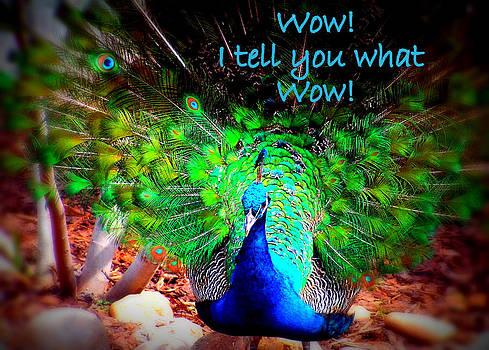 Wow Peacock by Amber Joy Eifler