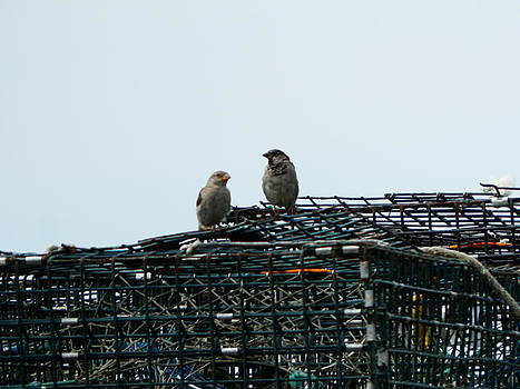 Valerie Bruno - Wrens on Lobster Traps