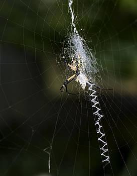 Heather Applegate - Writing Spider