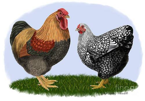 Wyandotte Rooster and Hen by Leigh Schilling
