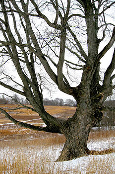 Wyeth Country by Gordon Beck