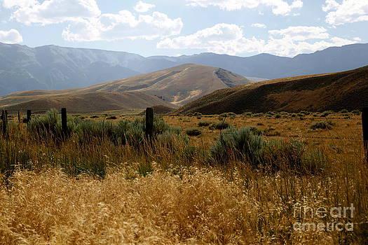 Sophie Vigneault - Wyoming Scenery