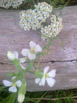 Yarrow And Radish Flowers by Jeannine Davidoff