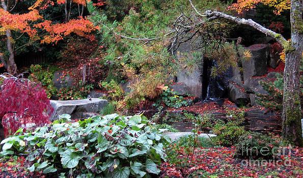 Ellen Miffitt - Yashiro Japanese Garden in Fall