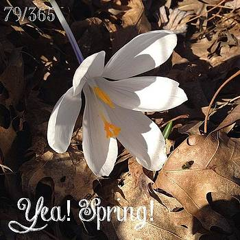 Yea! Spring! And I Still Have A Few by Teresa Mucha