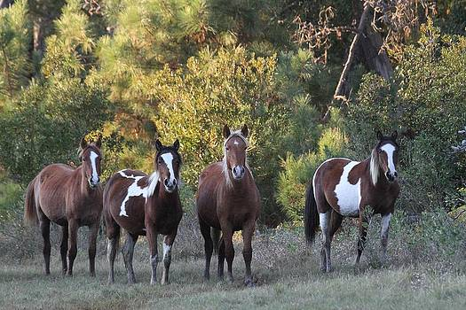 Yearling Fillies at Sunset by Stacey Steinberg