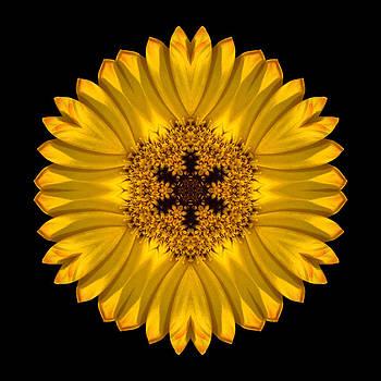 Yellow African Daisy Flower Mandala by David J Bookbinder