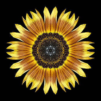 Yellow and Brown Sunflower Flower Mandala by David J Bookbinder