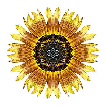 Yellow and Brown Sunflower I Flower Mandala White by David J Bookbinder