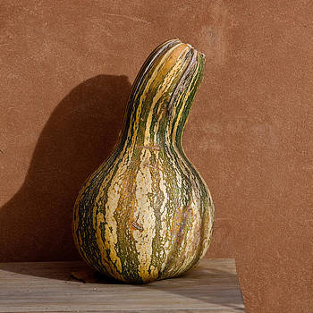 Art Block Collections - Yellow and Green Squash