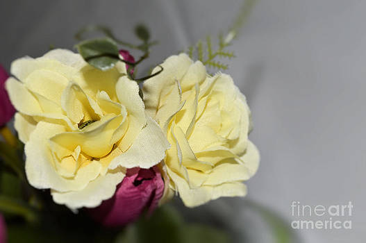 Yellow and pink flowers by Denise Jenks