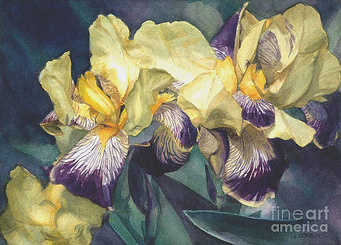 Watercolor of a Tall Bearded Iris painted in yellow with purple veins by Greta Corens