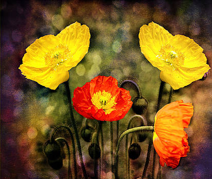Ludmila Nayvelt - Yellow and Red Poppies