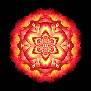 Yellow and Red Rose II Flower MandalaFlower Mandala by David J Bookbinder