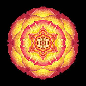 Yellow and Red Rose III Flower Mandala by David J Bookbinder