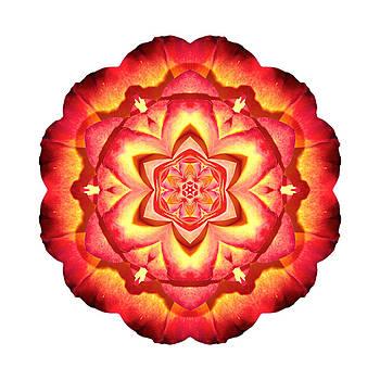Yellow and Red Rose III Flower Mandala White by David J Bookbinder