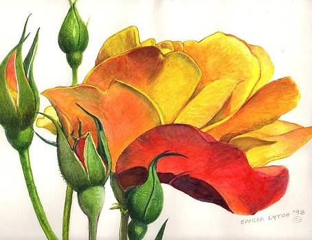 Sandra Lytch - Yellow and Red Roses