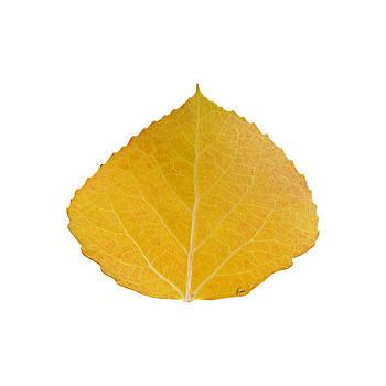 Yellow Aspen Leaf 2 by Agustin Goba