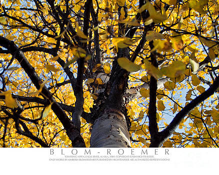 Yellow Aspen Looking Up by Kimberly Blom-Roemer