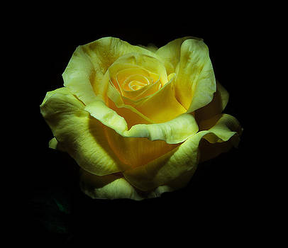 Yellow Beauty by Cecil Fuselier