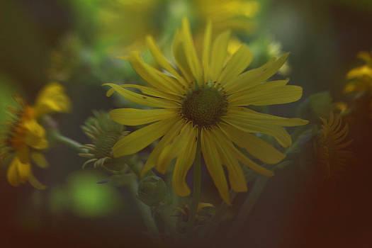 Yellow Beauty by Lori Peterson