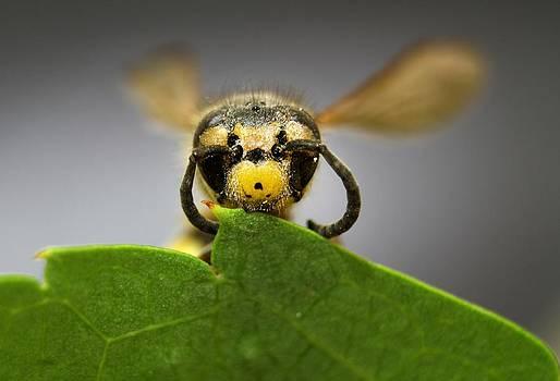 Yellow Bee by Kazim Yurekli