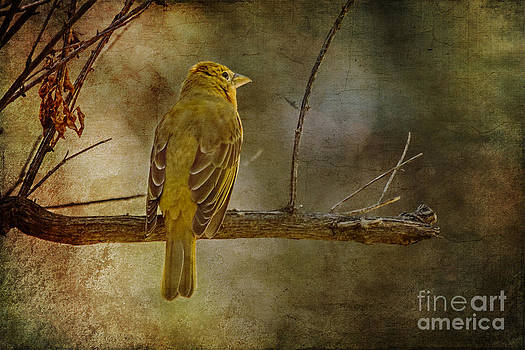 Yellow Bird Resting by Pam Vick