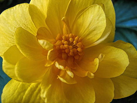 Dale Kauzlaric - Yellow Bloom