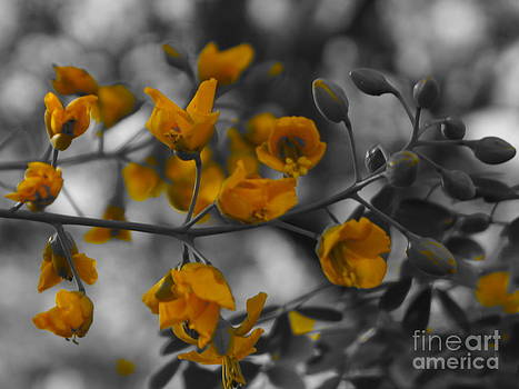 Yellow blooms by Tracey McQuain