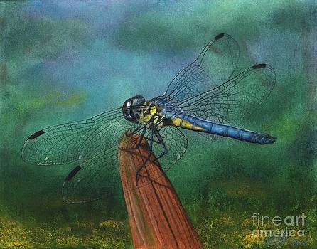 Yellow Blue Dragonfly by Christian Conner