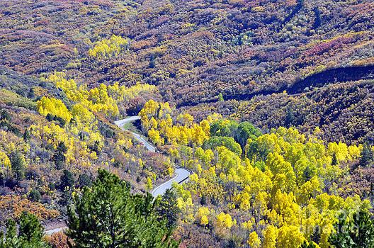Yellow Brick Road  by Juls Adams