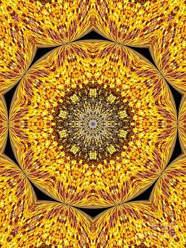 Yellow Burst  by Annette Allman